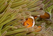Reef Aquariums / Saltwater Aquariums, reef tanks, coral / by Rob Schmelz