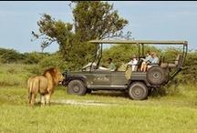 African Safari Holidays / Go on photographic safari in Kenya, Tanzania, South Africa, Botswana and Namibia. We help you creating an amazing photographic safari and Africa holiday.