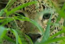 eBooks / African safari reads, travel information and more.