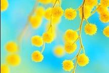 Not So Mellow Yellow ☀