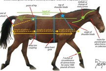Equine Educational Materials