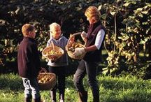 Growing Zespri Kiwifruit