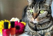 Cute Animals / Because who doesn't love puppies, kittens and bunnies?! / by Zoya Nail Polish