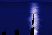 black & blue / by Nina McDonald