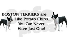 Best Damn Dog In The Whole Wide World ⋈ / I ❤ them Boston Terriers especially my crazy dogger co-blogger Zeke.