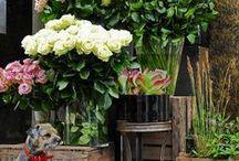 Flowers and Floral Arrangements / Floral Arrangements  / by Kathryn Myrick @   K Rossi & Company
