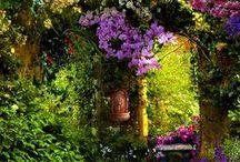 Gardens / by Willow Thorsen
