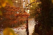 Autumn / by Beth DiMeo