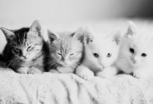 Cats!!! Meowwww..!!!!