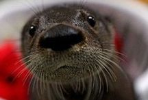 Otters / by Debra Padgett