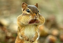 SQUIRRELS...and other adorable creatures! / by Gaela Leatherman