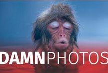 Damn photographers