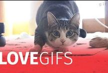 Love Gifs!!