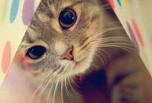 Cute Cat <3