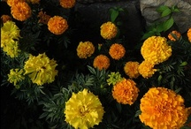 Nature | Flowers
