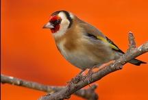 Nature | Birds