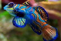 What You See Under The Sea / I'm crazy about animals of the sea. I have owned many saltwater tanks sometimes 3 and 4 at one time. It's the only fish tanks I will ever own. <3