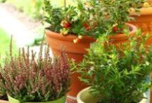 Container Gardening / by Ruth Myers