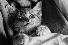 I'm a Cat, I'm a Kitty Cat / by Elizabeth Oviedo