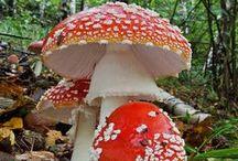 I'm a Fungi! / Mushrooms, toadstools, lichen, spores