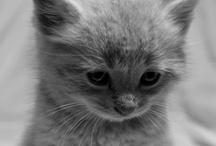 Cute Animals / by Denis Bostandzic