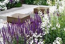 Garden Ideas / Anything to do with landscaping, house exteriors, plants and entertaining outside