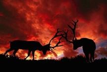 Magnificent Animals