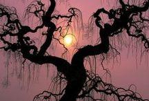 Arboles / Bajo tu sombra encuentro paz y en tus raíces seguridad. Me enseñas tanto de la vida... así... sencillo... en silencio... creces hacia el cielo, tus ramas se tiñen de colores y acaricias el sol. Tus hojas bailan con el viento como si el silencio fuera una canción.  Marielos Mora