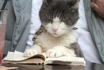 Books/Reading Material / by Melba Beadling
