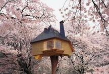 Tree House / by Julia Mêendiz