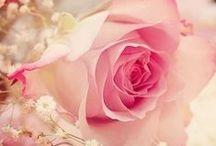 Flor e cor  ♥ amor ♥