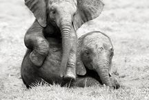 Animals (...but mostly elephants) <3