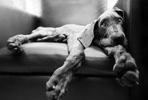 Photography | Dogs / by Patrick John Azzopardi