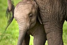 ELEgant Enlightening ELEPHANTS ✿⊱╮ / by Nicci🌹 Bunni🌹 Rose