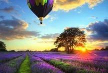 Lavanda (Lavender) / Lavanda este o planta extraordinara cu proprietati benefice pt trup si psihic. Are extrem de multe utiliati, insa este cel mai des intalnita in produsele cosmetice. www.only-natural.ro