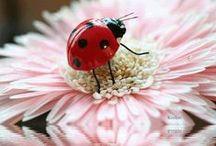 Pequeno grande amor ♥