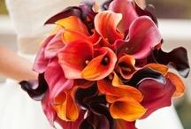 Wedding Ideas / July 5, 2013! / by Cherie Garza