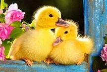 Ducks for Delilah... / by * Touched by Time