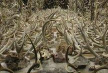 ◀︎ C O L L E C T ▶︎ / The joy of curated hoarding