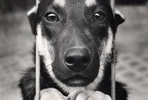 ADOPT { Animal Rescue } / There are so many amazing animals out there that need good homes. Rescue a pet today and you'll find they actually end up rescuing you! Peace, love & blessings www.tresorsdeluxe.com