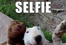 Funny memes+selfies