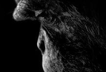 Animalia / Random animal images / by Ana Djordjevic