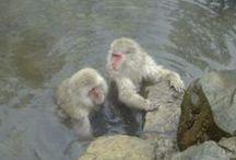 Hot Spring, Baths in Japan / 温泉、お風呂 / 日本のお風呂最高! / Hot Spring, Baths in Japan / by Aiyama Kimono / あい山本屋 リサイクル着物専門店