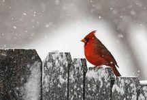 Birds / by mªdcªtj0 2.0