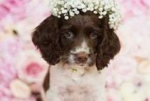 Cute animals at weddings / Adorable animals involved in weddings. Why not?