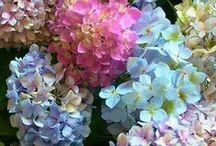 """Gardening / """"To plant a garden is to believe in tomorrow."""" ~Audrey Hepburn"""