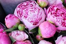 Flowers... / by Orian Behar