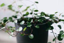 indoor jungle / plants are my best friends (no diamonds here)