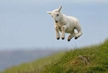 Animalia Domestica / I grew up on a farm.  We had animals. / by Lee Anne Dollison