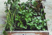 green DIY / DIY involving plants, herbs and flowers